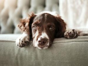 ჩვენ ვეყრებით, მაგრამ ვის დარჩება ძაღლი?