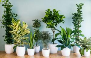 15 სასარგებლო მცენარე თქვენი სახლის ყოველი ოთახისთვის