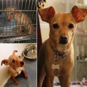 თავშესაფრიდან გამოყვანილი ძაღლები - ნახეთ, როგორ შეიცვალნენ ისინი (ნაწილი 2)