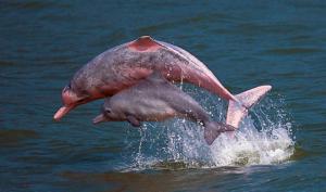 რატომ ეშინია ზვიგენს დელფინის?
