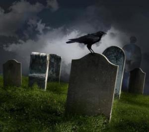 მეცნიერთა კვლევის შედეგი - რა ხდება ყვავის სიკვდილის შემდეგ?