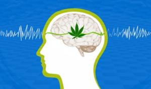 ხანდაზმულებში მარიხუანა ტვინის დაბერების პროცესს აჩერებს და მის ფუნქციონირებას აუმჯობესებს