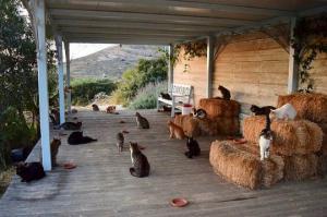 ვაკანსია -  უნდა მოუაროთ 55 კატას, პირობები: უფასოდ სახლი, სამჯერადი კვება და 2000 ევრო ხელფასი