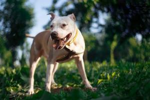 50 წლის ქალი,რომელიც შვილიშვილის დაცვას ცდილობდა საკუთარმა ძაღლმა სასიკვდილოდ დაგლიჯა