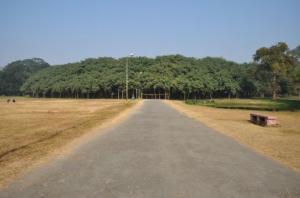 უზარმაზარი  ტყე, რომელიც მხოლოდ ერთი  ხისგან შედგება
