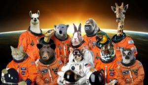 პირველად კოსმოსში არა ძაღლები, არამედ ხილის ბუზი გაუშვეს(კოსმოსის დალაშქვრის საინტერესო ისტორია)