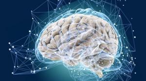 5 საინტერესო ფაქტი ტვინის შესახებ, რომელიც თქვენს ცხოვრებას შეცვლის