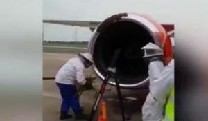ფუტკრების მიერ თვითმფრინავზე განხორციელებული შტურმის გამო რეისები გადაიდო
