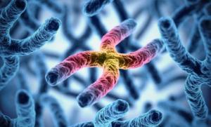 საატესტატო გამოცდების ტესტი: ბიოლოგია - ინტერფაზა, მიტოზი