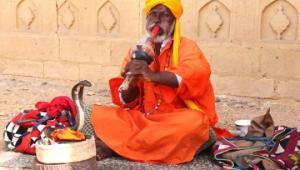 ინდოეთში გველების მომთვინიერებელს მაიმუნმა კობრა მოსტაცა(ვიდეო)