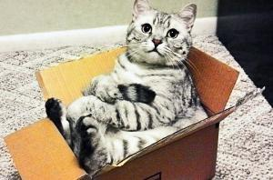 როგორ გვატყობინებენ კატები საკუთარი ავადმყოფობის შესახებ, რატომ უყვართ წყლის  ონკანიდან სმა და  მათი სხვა, უცნაური, ქცევების ახსნა
