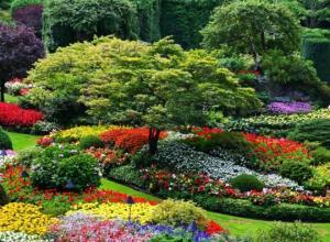 ულამაზესი კადრები მსოფლიოში ყველაზე ლამაზი და მომაჯადოებელი  ბაღიდან