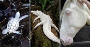 როგორ გამოიყურებიან ალბინოსი ცხოველები (+ იშვიათი ფოტოები)