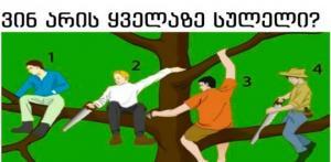 ტესტი: ვინ არის ყველაზე სულელი ამ ხეზე? აირჩიეთ და ჩვენ თქვენი პიროვნების ფსიქოლოგიურ ანალიზს გავაკეთებთ