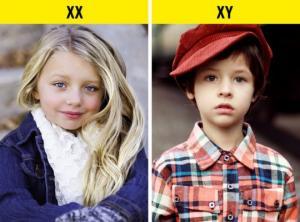 რომელ გენებს იღებს ბავშვი დედისგან და რომელი გენები გადაეცემა მამისგან?