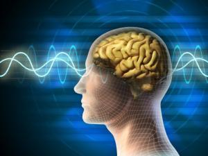 ადამიანის ტვინი - მეცნიერების სიმფონია