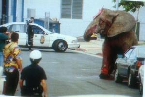 ცირკში აჯანყებული სპილო,რომელიც სასიკვდილოდ გაიმეტეს