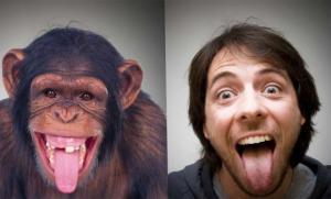 რით განვსხვავდებით სინამდვილეში მაიმუნისგან?