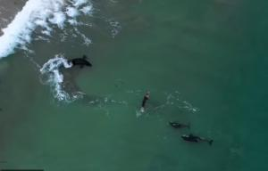 შემთხვევა ოკეანეში - სამ უზარმაზარ თევზს შორის მოხვედრილი მცურავი (ვიდეო)