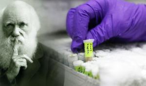 ამერიკელმა და ევროპელმა მეცნიერებმა ევოლუციის თეორია უარყვეს