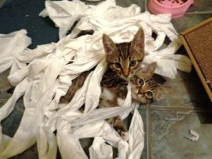 რას აკეთებენ შინაური ცხოველები, როცა სახლში არ ხართ