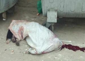 თბილისში კიდევ ერთი ძაღლი წამებით მოკლეს