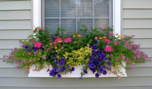 როგორ მოვაწყოთ სახლი და ეზო დიდი ზომის ქოთნის მცენარეებით – 70 საოცარი იდეა