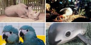 მათი დაცვა ვერ შევძელით:  2018 წელს გადაშენებული ცხოველები...