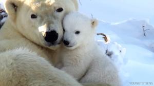 მოძრავი  ანიმაციებით (გიფებით) გადმოცემული 25 საინტერესო ფაქტი  ცხოველთა  სამყაროს  შესახებ