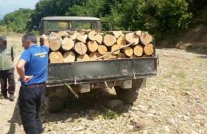 ხე-ტყის უკანონო მოპოვების 14 ფაქტი სიღნაღსა და დედოფლისწყაროში
