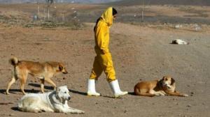 ირანში ძაღლთან ერთად სეირნობა დასჯადი ხდება