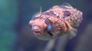 ყველაზე შხამიანი თევზი მსოფლიოში