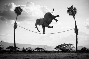 ფრანგი ფოტოგრაფი იყენებს ციფრულ მანიპულაციებს ცხოველების კომიკურ ჭრილში წარმოსაჩენად