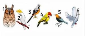აირჩიეთ ფრინველი და გაიგეთ დღის შეტყობინება