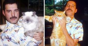 ფრედი მერკურის 20  უნიკალური ფოტო თავის  საყვარელ კატებთან ერთად - ამ კატებს იგი ბავშვებივით უვლიდა
