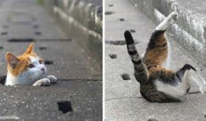 უსახლკარო კატები და მათი თავისუფალი, გიჟური ცხოვრება