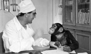 როგორ აჯვარებდა ადამიანს მაიმუნთან საბჭოთა მეცნიერი აფრიკაში და სოხუმში