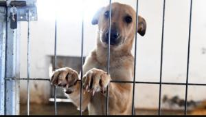 დეპუტატებმა ცხოველებისადმი სასტიკი და არასათანადო მოპყრობისათვის გათვალისწინებული სასჯელის ზომების გამკაცრებას მხარი დაუჭირეს