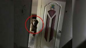ძაღლი მძინარე პატრონს ყოველ ღამით უთვალთვალებდა, როდესაც მამაკაცმა ეს შენიშნა, გადაწყვიტა საიდუმლოს ამოხსნა!