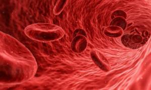 ადამიანის ერითროციტები - სისხლის წითელი უჯრედები