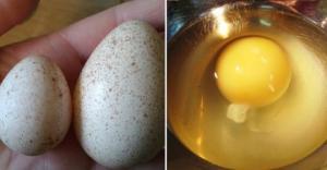 ინდაურის კვერცხი- ყველაზე სასარგებლო პროდუქტი, რომელიც აუცილებლად უნდა მიირთვათ