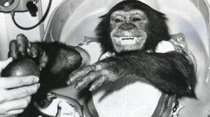 გმირი თუ მსხვერპლი? - რა დაემართა კოსმოსში გაგზავნილ შიმპანზე ჰემს?