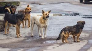 დედოფლისწყაროს მერია მაწანწალა ძაღლების პრობლემის მოგვარებას იწყებს