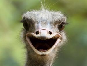 10 საოცრად ბედნიერი ცხოველი რომელიც გაახალისებს თქვენს დღეს