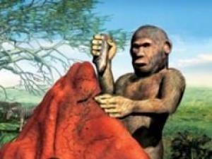 ადამიანის მსგავსი მაიმუნები