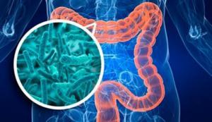 რამდენი ბაქტერიული უჯრედისგან შედგება ადამიანის ორგანიზმი?