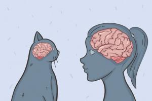 30 საინტერესო ფაქტი კატების შესახებ, რომელიც ყველამ უნდა იცოდეს