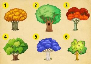 აირჩიეთ ხე და გაიგეთ, რა ცვლილებებს უნდა ელოდოთ ცხოვრებაში