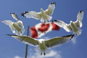 5 ყველაზე მარტივი ქვეყანა ემიგრაციისთვის