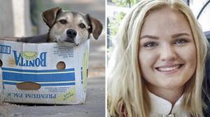 ნორვეგიელმა ტურისტმა მაწანწალა ძაღლი გადაარჩინა,თვითონ კი ცოფისგან დაიღუპა